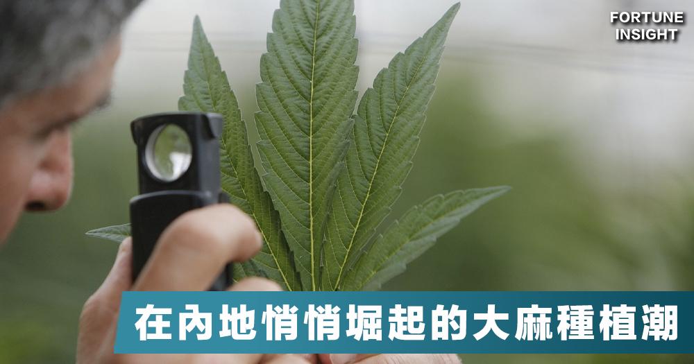 【世界農場】大麻種植熱潮默默地紮根內地,國外用家會否向中國大麻買單?