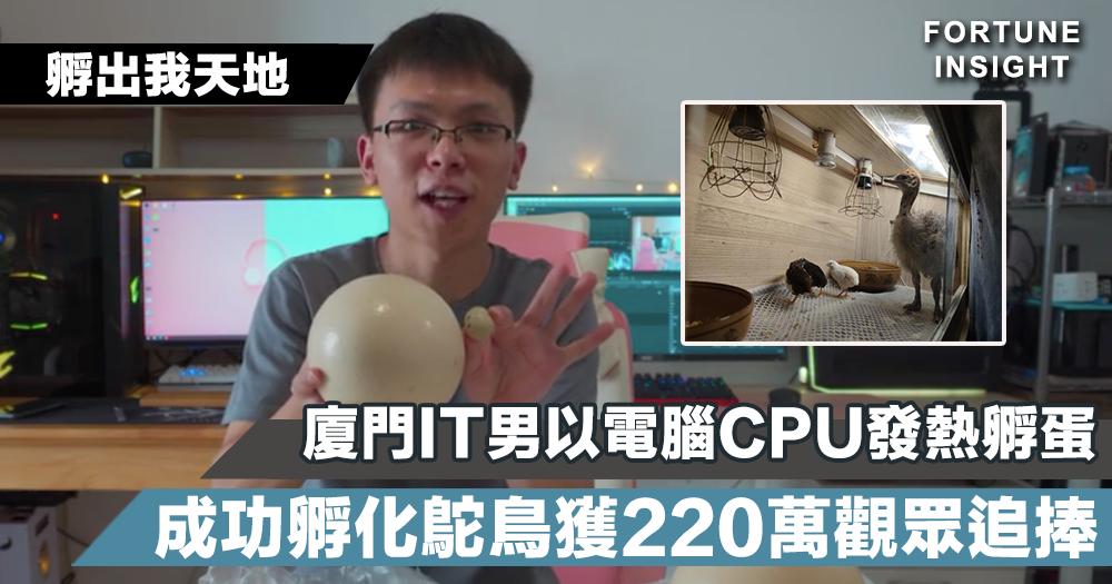 【孵出我天地】廈門IT男以電腦CPU發熱孵蛋 成功孵化鴕鳥獲220萬觀眾追捧