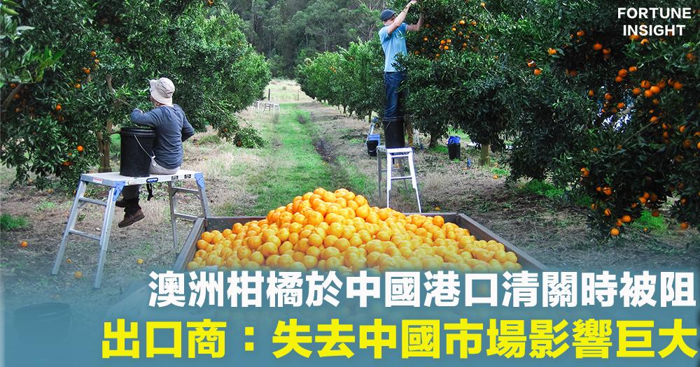 【中澳角力】中澳關係頻頻惡化  澳柑橘於中國港口清關時被阻  恐失中國市場